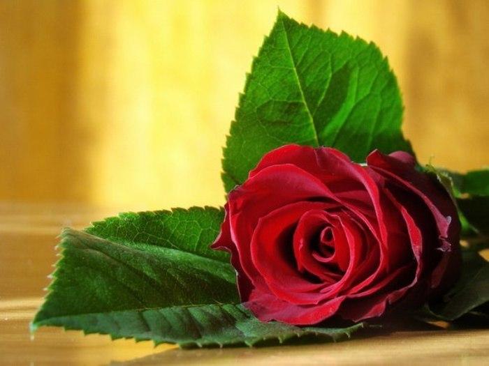 Как продлить жизнь розам