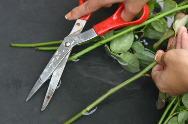 подрезание букета роз