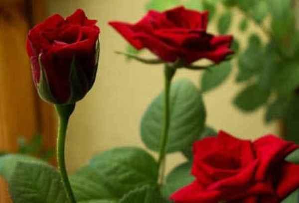 Как сделать чтобы цветы живые простояли дольше