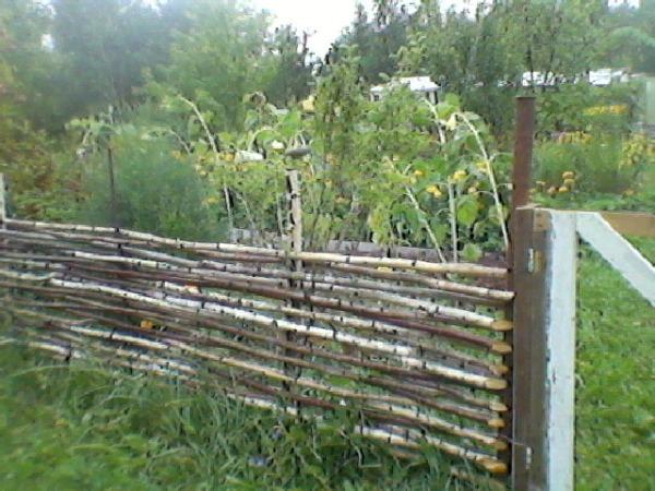 плетеный забор из березы